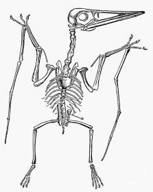 Dinosaur Bone Scavenger Hunt